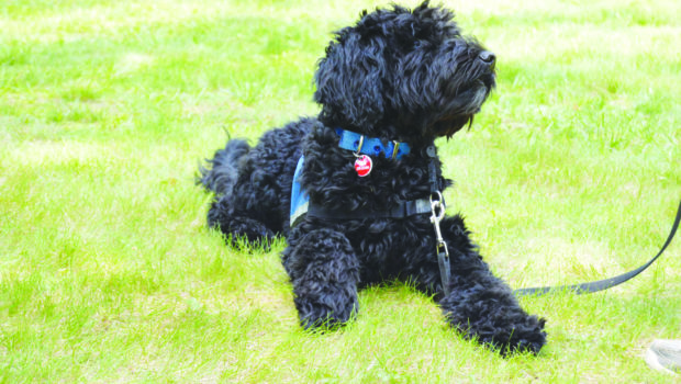 A NEADS service dog. / PHOTO COURTESY NEADS